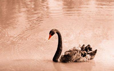 El cisne negro de Taleb